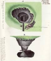 Tegning af nedgravningen i Nordhøjen oppefra og i snit udført af J.H.T. Hanck i 1820, Nationalmuseet.